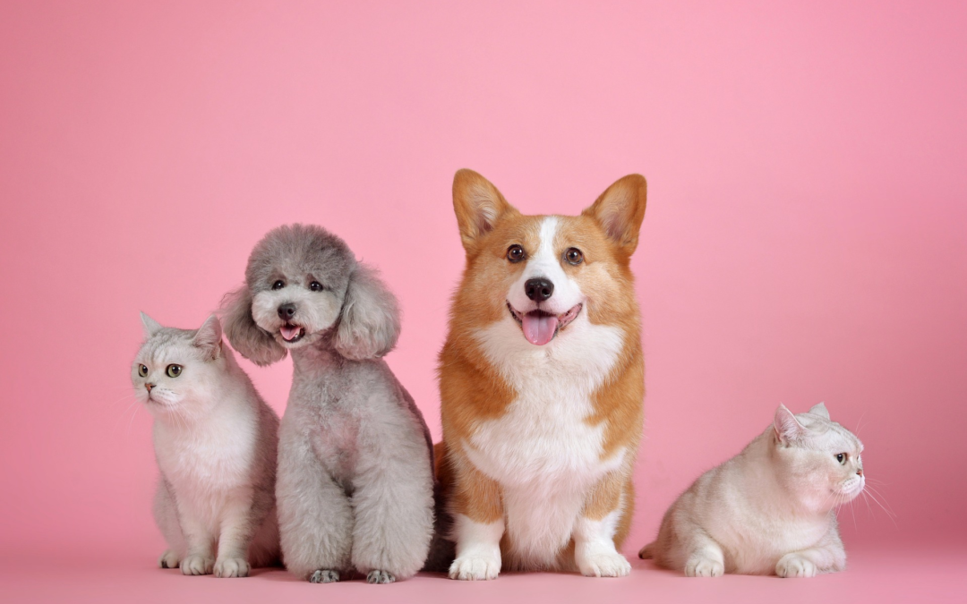 Stort udvalg til kæledyr